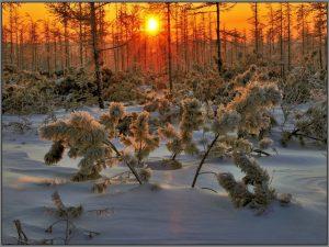 wintersonne6